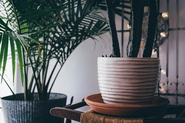 Four Indoor Plants That Improve Health & Wellness