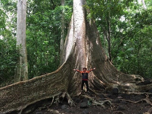 """Tour 100% thiên nhiên: Trải nghiệm rừng Nam Cát Tiên """"3 in 1"""""""
