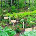 वेजिटेबल गार्डन और जैविक खाद से पैदावार में सुधार होता है