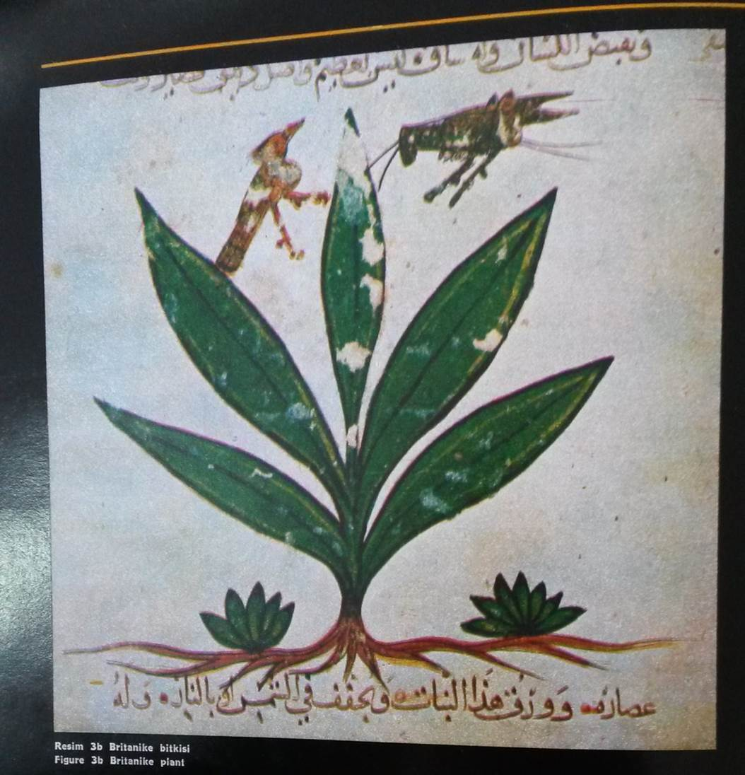 Kıymeti Bilinmeyen Bitki Hazinemiz