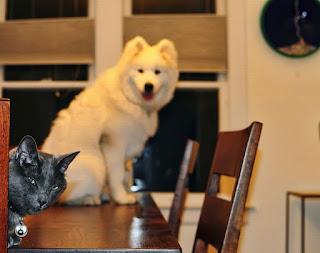 собака кошка на столе