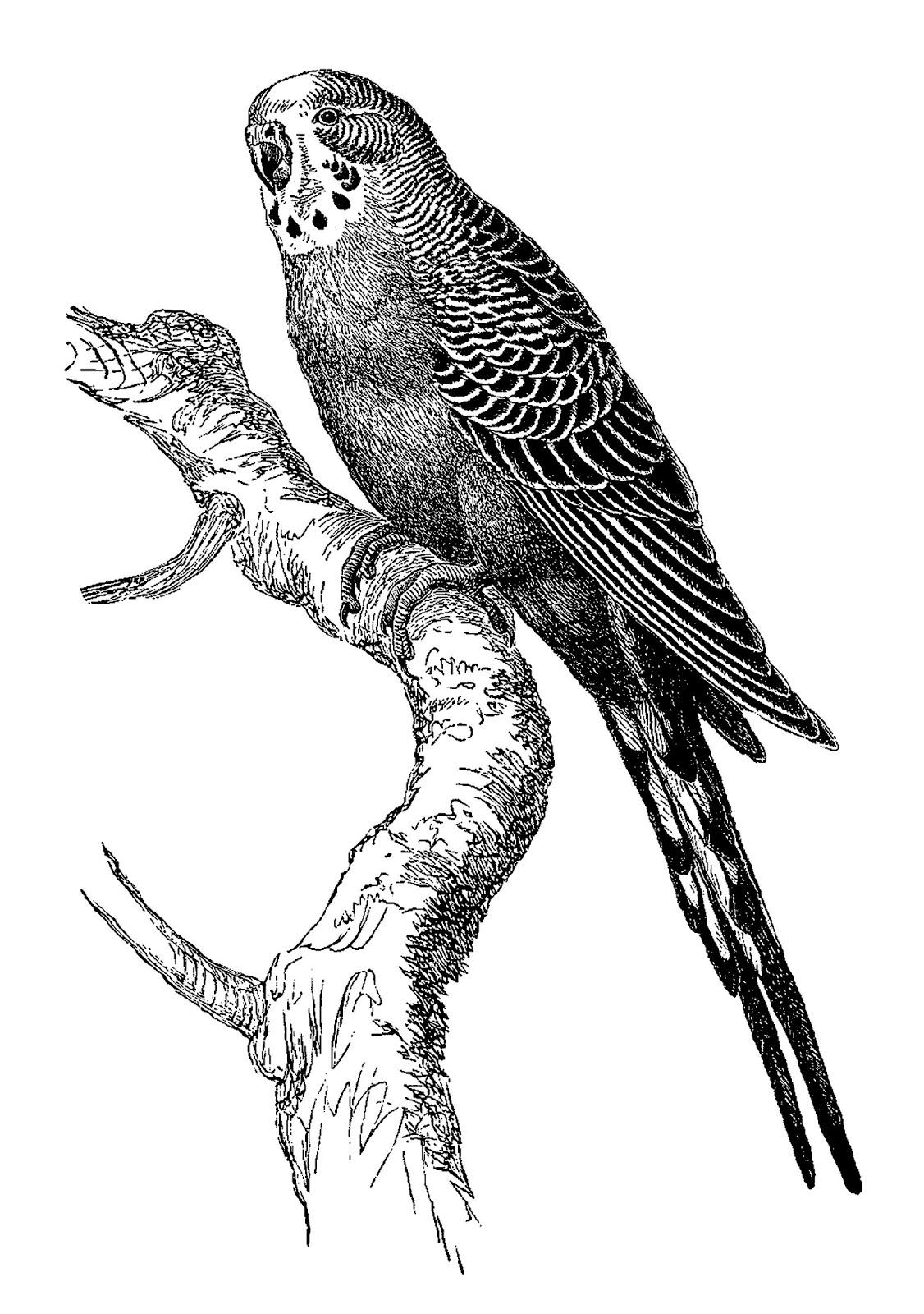 Digital Stamp Design Stock Bird Illustration Artwork