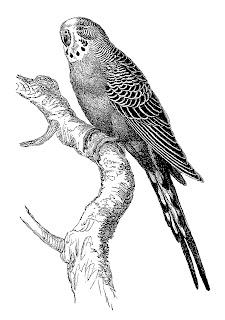 bird illustration digital clipart stock image