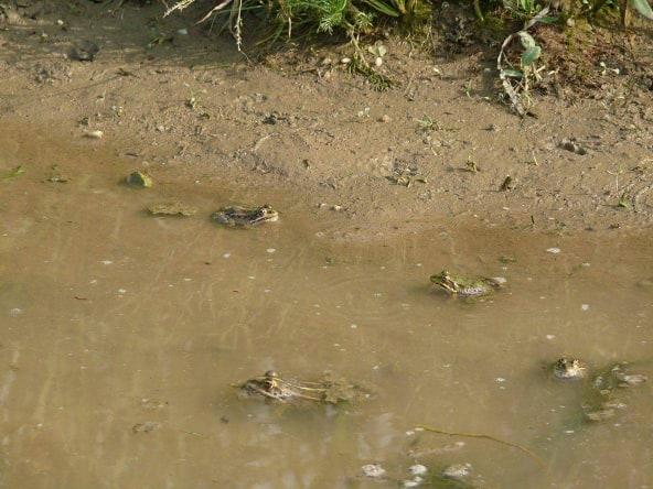 Όπως θα δείτε και εσείς τα βατραχάκια είναι πόλος έλξης αρκετών επισκεπτών της λίμνης.