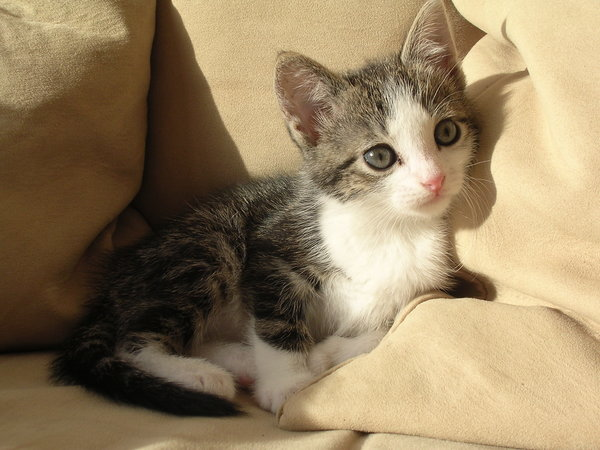 Cute little kittens  Pets Cute and Docile