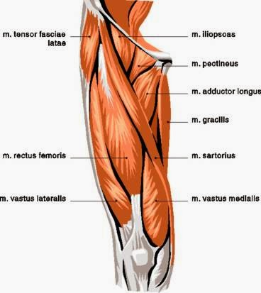 Indent in Outer Thigh Muscle Explained » Scary Symptoms