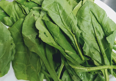 Fresh spinach (palak) leaves for Palak Paneer recipe