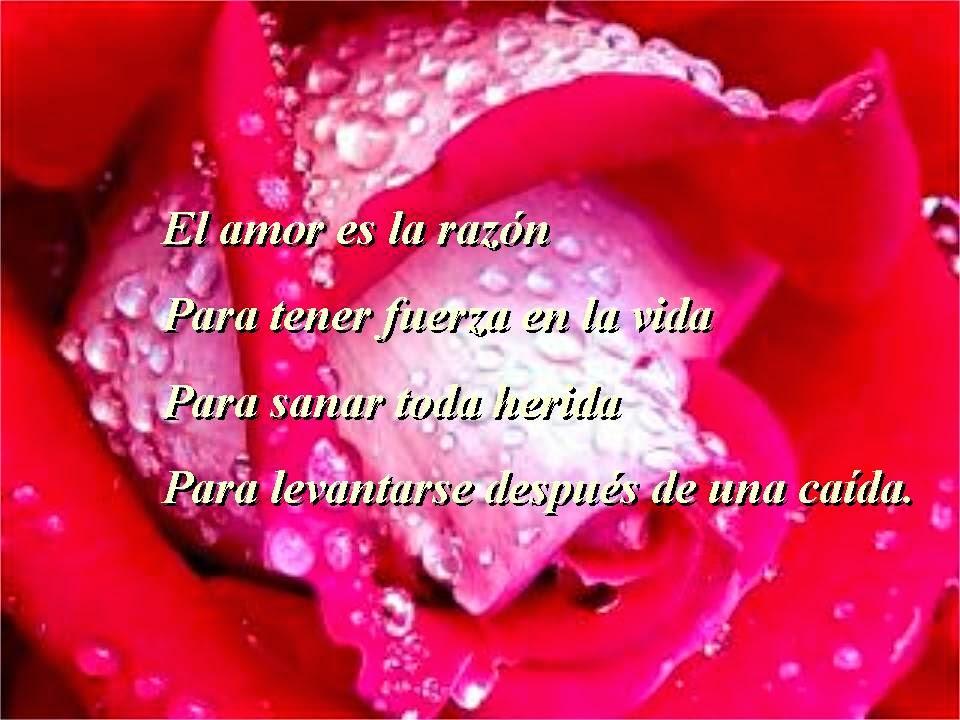 Poemas De Amor Cortos Para Enamorar Imagenes Postales Imagenes