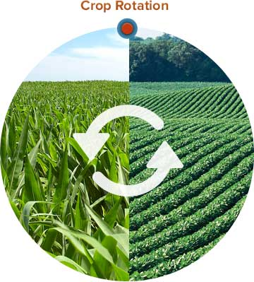 Agriculture And Technology