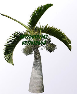 Palm Botol | Jasa Tukang Taman Surabaya