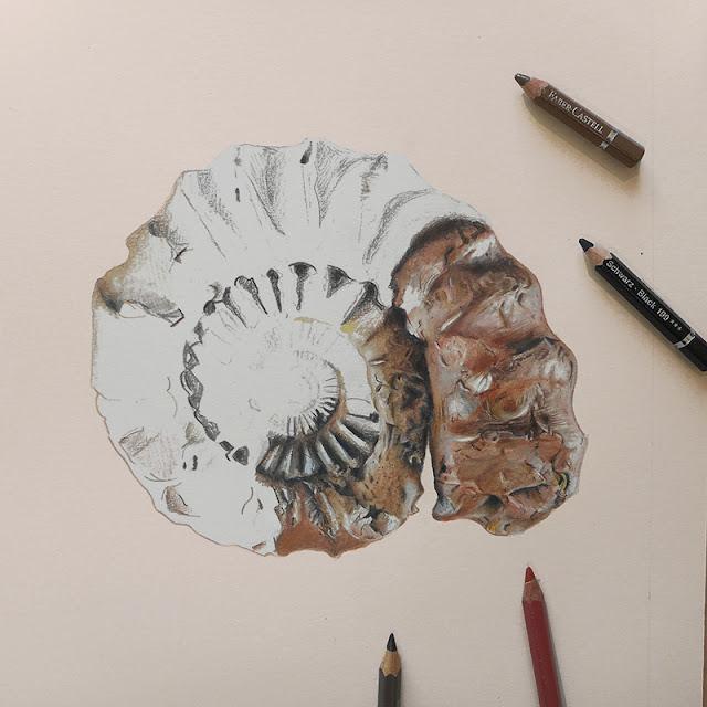 Desin d'une ammonite à demi réalisé