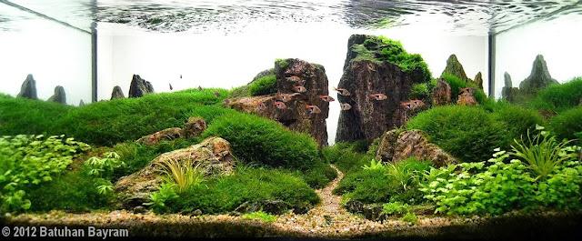 foto seni aquascape yang unik menarik cantik dan juga menakjubkan