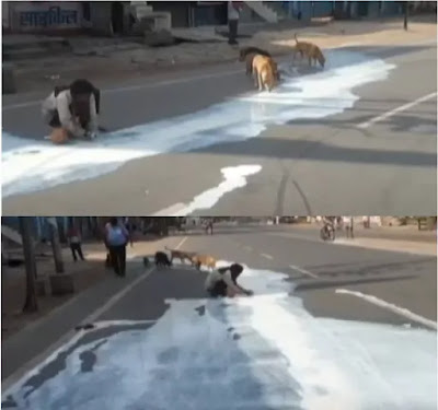 Man Collecting Milk From Road With Stray Dogs During Lockdown India News
