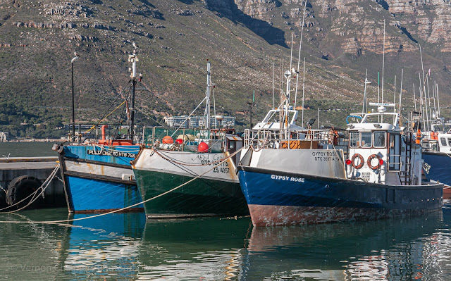 Fishing Boats Moored in the Hout Bay Harbour Cape Town