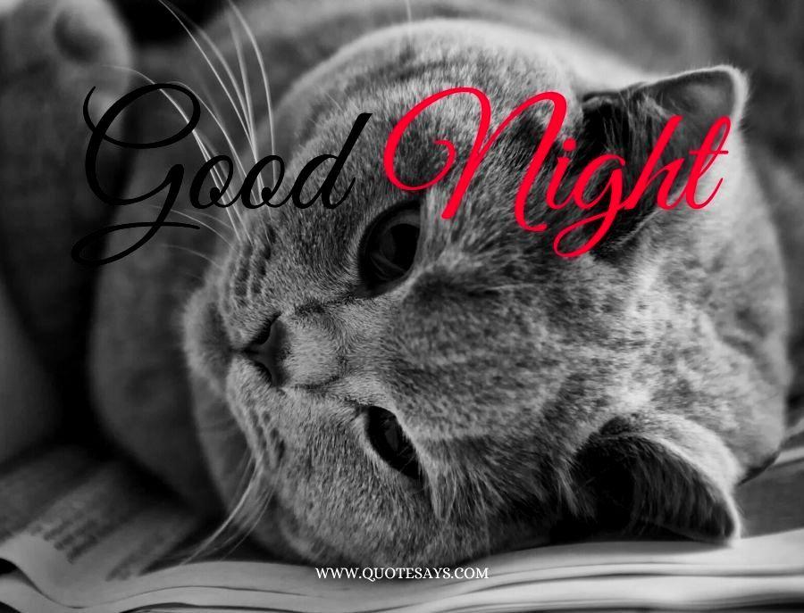 Good Night Black Cat On Bed