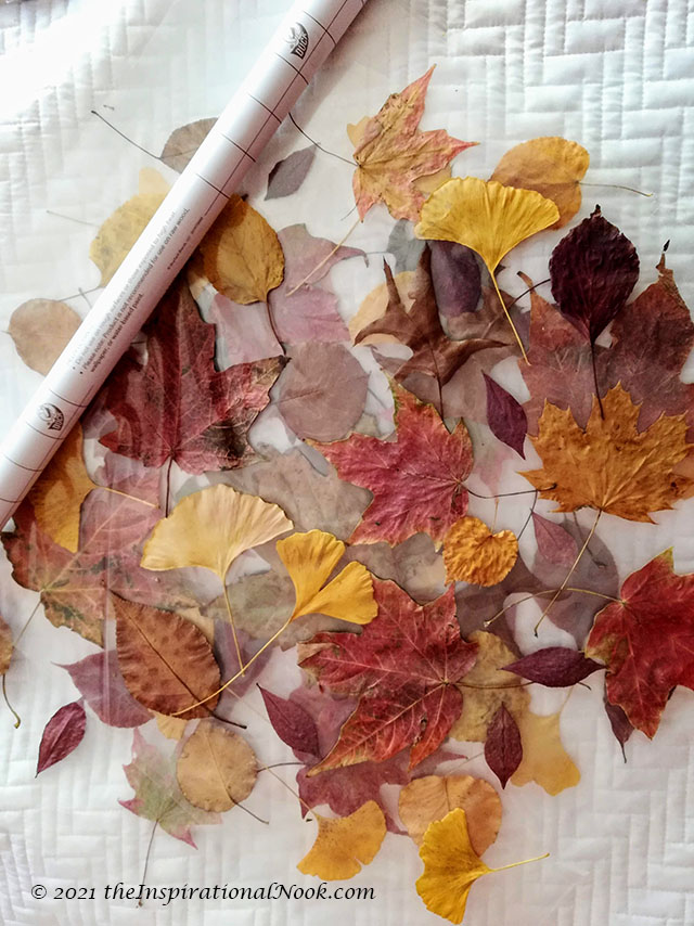 Leaf Craft Activities, Autumn Leaves craft, crafts with real leaves, autumn leaves art and craft, autumn leaf crafts preschool, autumn leaves arts and crafts, autumn leaf craft ideas for preschoolers, autumn leaves craft ideas, autumn leaves window stickers, fall leaves window clings, autumn window clings, diy window stickers, diy window cling art, craft from dry leaves, leaf suncatcher craft, autumn leaf suncatchers, leaf collecting and pressing, framing dried leaves, pressed autumn leaves, dried pressed leaves,