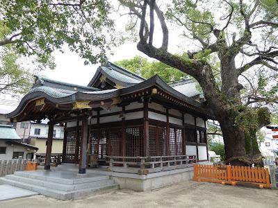 【門真市稗島】堤根神社拝殿とクスノキ