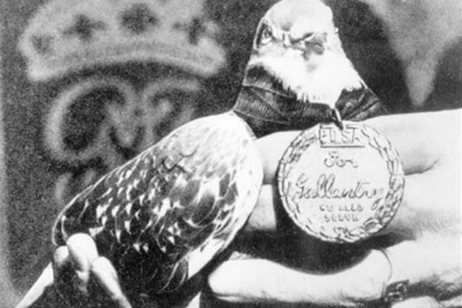palomas-en-la-guerra