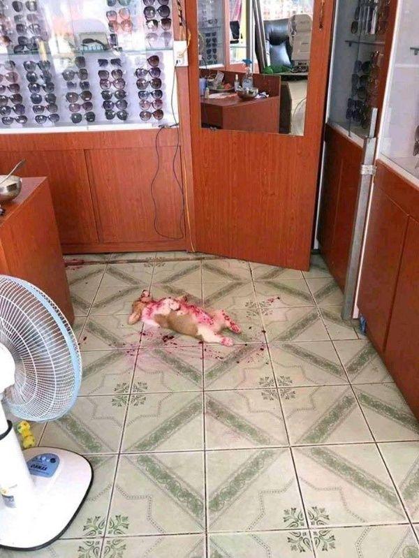 Travieso perro le juega una broma de espanto a su dueña