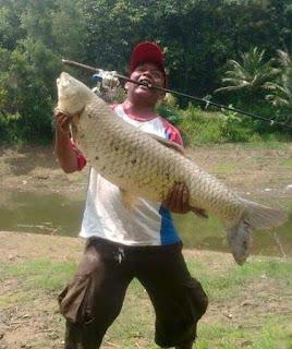Ikan Air Tawar Terbesar di Indonesia