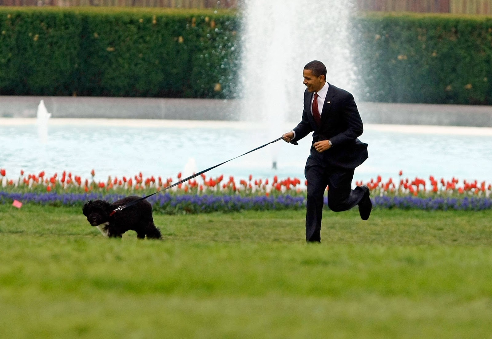 What Are The Names Of The White House Dogs