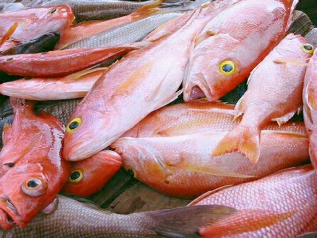 doa untuk mancing ikan