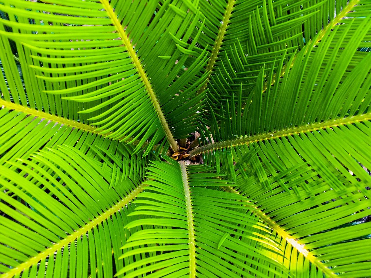 palm 200965 1280