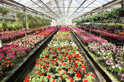 Большая распродажа растений в цветочной компании «Харченко» в агрофирме «Подмосковное»