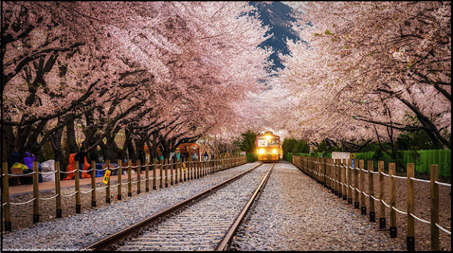10 Tempat Wisata Di Korea Selatan