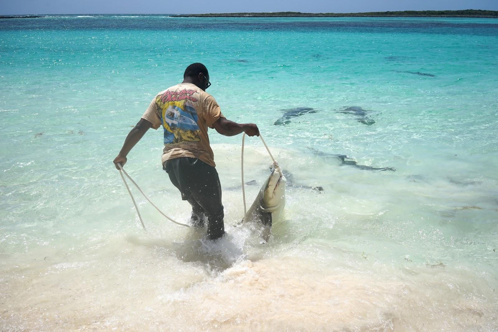 sharks in nassau