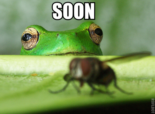 """30 Funny Soon Meme Pics: Amazing Animals Pictures: """"Soon"""", The Very Funny Animal"""