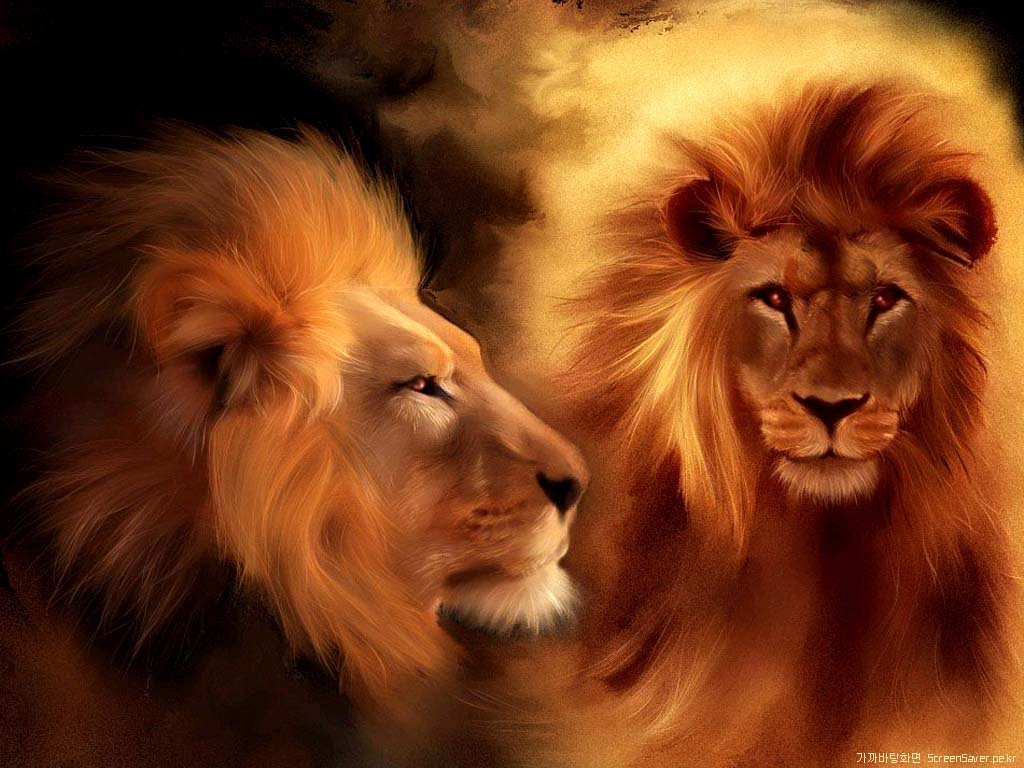 Hd Lion Pictures Lions Wallpapers: Free Download Wallpaper