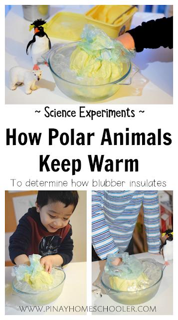How Polar Animals Keep Warm Experiment
