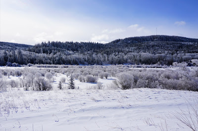 Cypress Hills Provincial Park in Winter