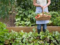 Yuk Gunakan Waring Sayur Agar Kualitas Hasil Panen Tetap Terjaga