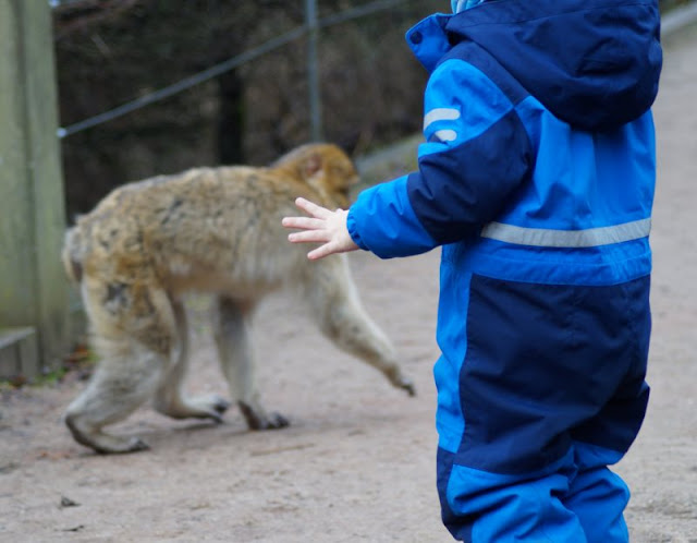 Tierpark Neumünster Kinder Familie Herbst Winter Frühjahr Berberaffen Freigehege Affen