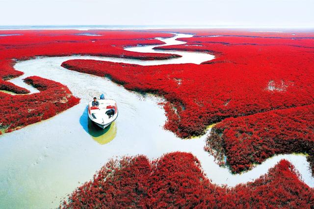 Pantai Merah Panjin, Tiongkok