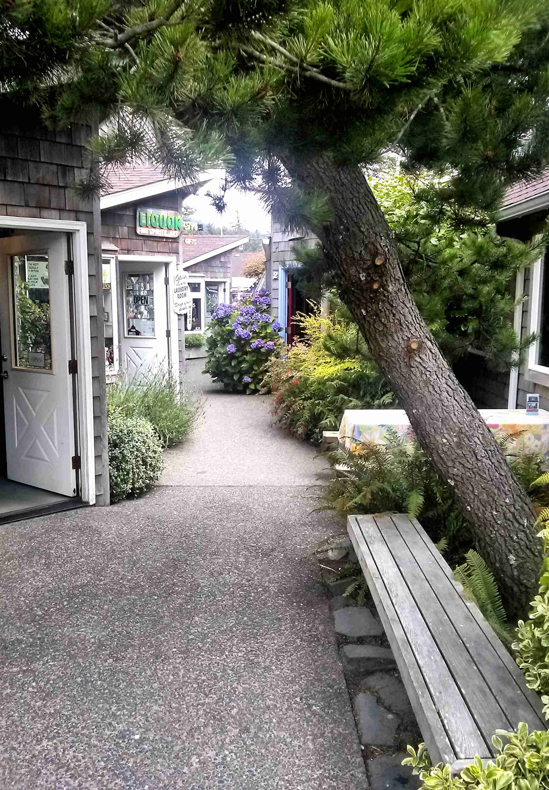 cannon beach singles Get details of 1688 hemlock st your dream home in cannon beach, 97110 and view its photos, videos, amenities and local information.