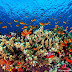 Mercan kayalıklarını kurtarmak için 400 milyon dolarlık proje