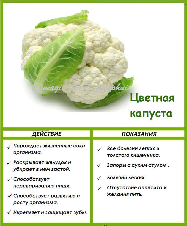 Капуста Свойства Диета. Полезные свойства белокочанной капусты польза для здоровья и при похудении