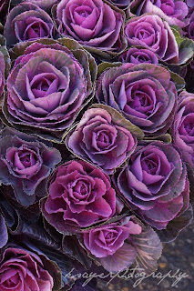 Ornamental cabbage at the farmers market