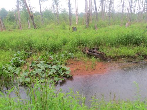 Guernsey Creek