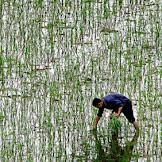 Polusi Akibat Pertanian Lebih Parah dari Perkiraan