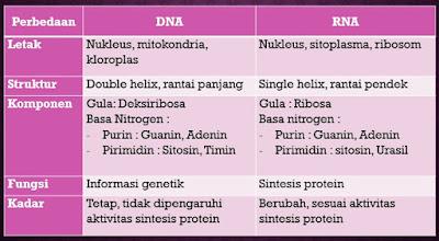 Perbedaan DNA dan RNA, Gen, serta Kromosom