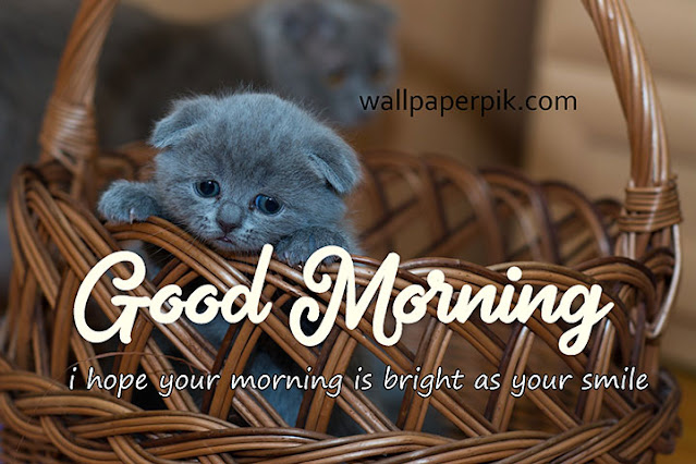 Good Morning Images Hd Morning Pictures Wishes Messages