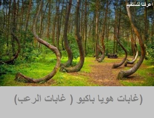 غابات هويا باكيو ( غابات الرعب)
