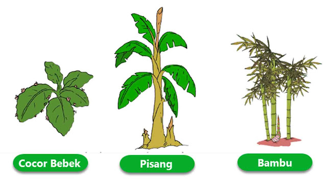tumbuhan yang berkembang biak dengan tunas
