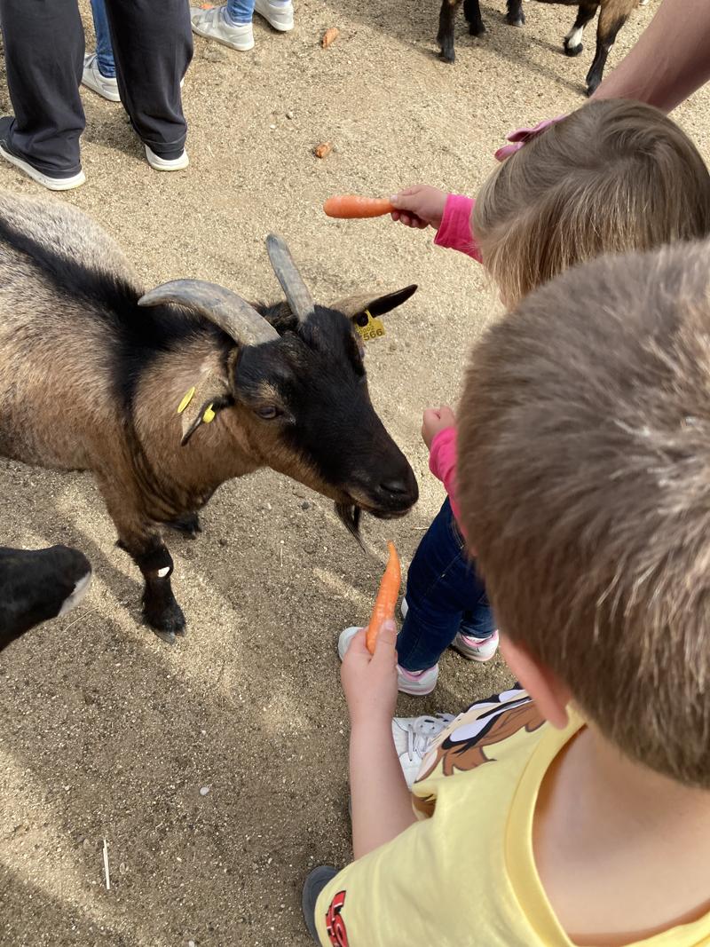 Safari Madrid cabra