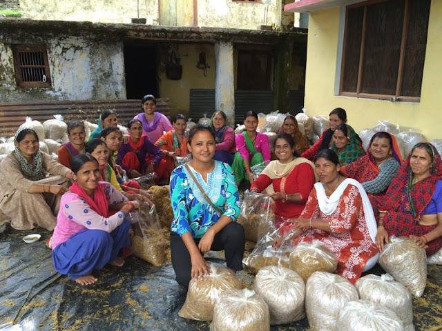 दिव्या रावत मशरूम लेडी - success story of divya rawat