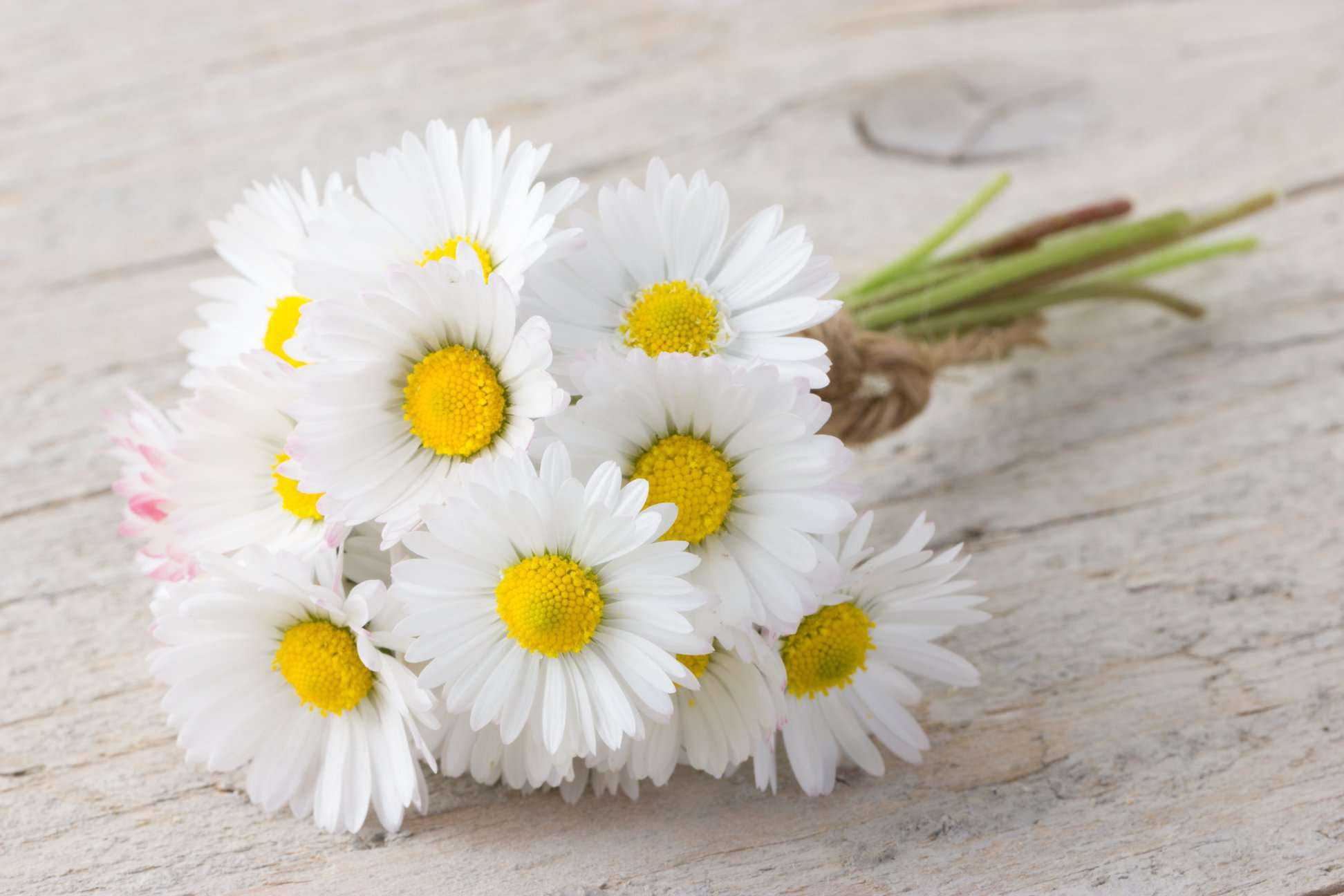 National Daisy Day Wishes for Instagram